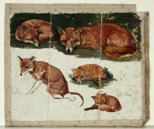 whiteman-violet-foxes