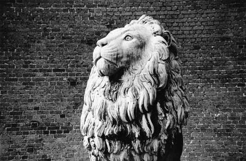 peter-peryer-lion-copenhagen