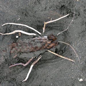 Sea Week - sand sculpture